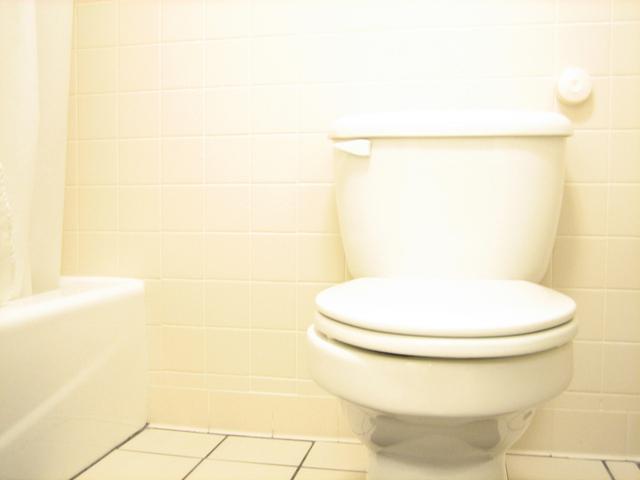 Mold Mildew In Toilet Tank